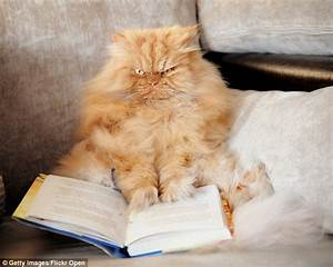 Meet Garfi, the cat who looks permanently angry | Daily ...