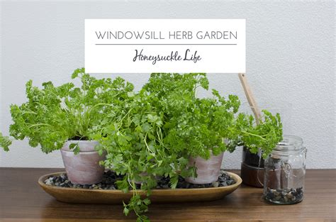 windowsill garden herb diy quality smalltowndjs