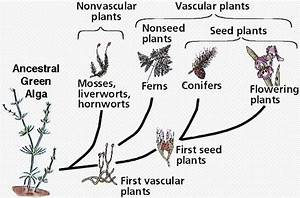 Evolution of plants | Lucky Sci