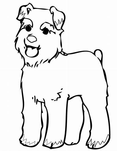 Schnauzer Coloring Pages Dog Miniature Printable Schnauzers