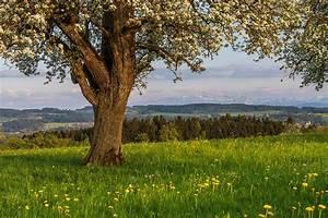 Schöne Bilder Kaufen : fr hling sch ne landschaft bilder kaufen stimmungs foto als fineart by stefan somogyi fotografie ~ Orissabook.com Haus und Dekorationen