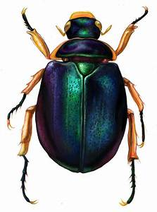 scarab beetle tattoo | Ink and rods | Pinterest