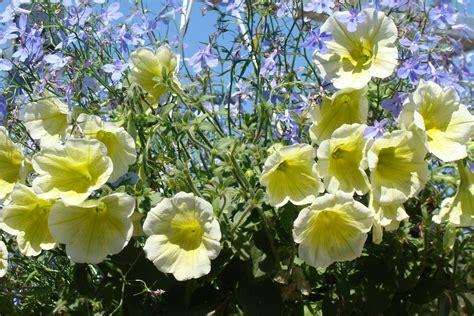 cuisiner avec des fleurs cuisiner avec des fleurs les quatre saisons