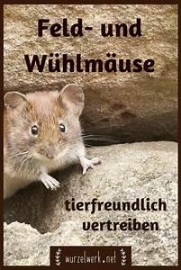 Mäuse Im Garten Vertreiben : das hilft wirklich gegen w hlm use im garten w hlm use tierfreundlich vertreiben ~ Whattoseeinmadrid.com Haus und Dekorationen