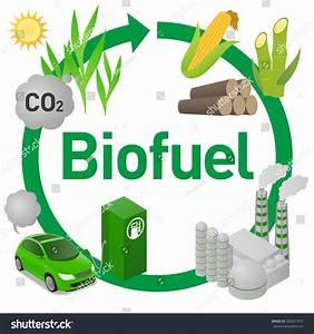 Biofuel Life Cycle Biomass Ethanol Corn Stock Vector 392427910