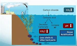 Ocean Acidification  The Devastating Truth