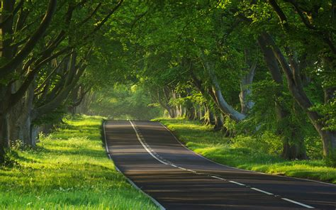 road nature wallpaper gallery