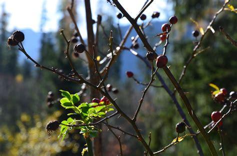 Herbst Im Garten Was Ist Zu Tun by Gartenarbeit Im Oktober Ziergarten Gartenarbeit Im
