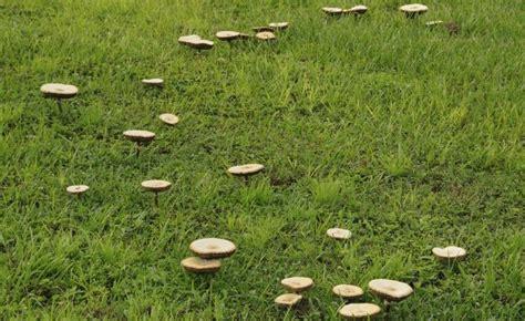 Pilze Im Rasen Kalken by 56 Best Rasen Images On