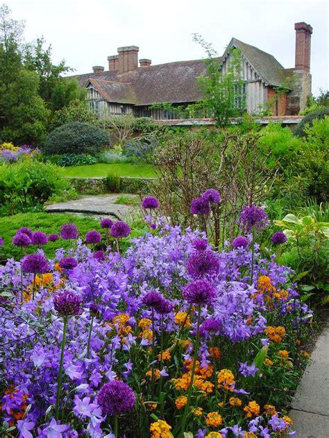 purple canula bell flower for cottage garden start