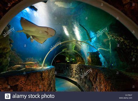 underwater world at the sealife centre aquarium at blankenberge stock photo royalty free image