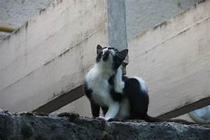 Bicarbonate Contre Les Puces De Chat : un rem de naturel imparable contre les puces et les tiques de votre chat ~ Melissatoandfro.com Idées de Décoration
