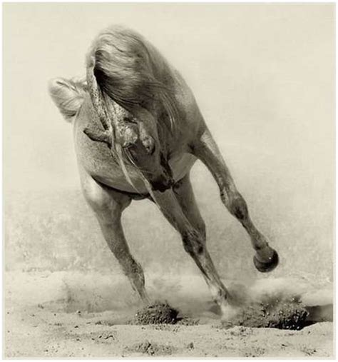 Arabian Horse Photos images