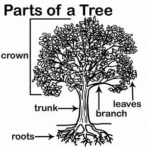 Aisdprekshare    Tree Homes Unit Resources