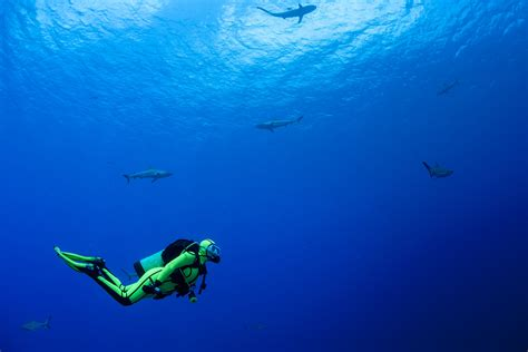20 common scuba diving signals