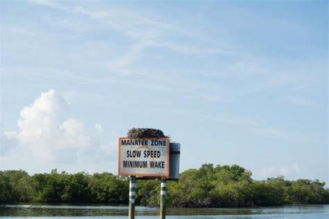 Groupon Boat Rental Naples Fl by Food Boat At Keewaydin Island Picture Of Naples