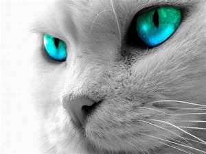 Cutest Cat Around World: cat eyes