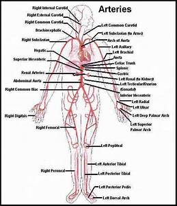 Amazing Guide For Cpt Code For Angiogram In Surgery