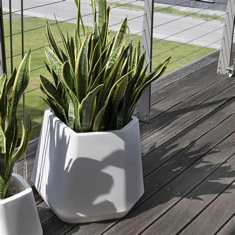 vasi per interno vasi per piante da interno moderni vasi moderni terricci