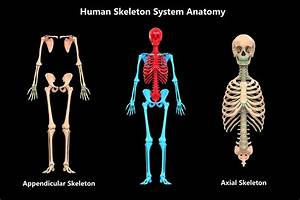 Guide To The Human Body Systems