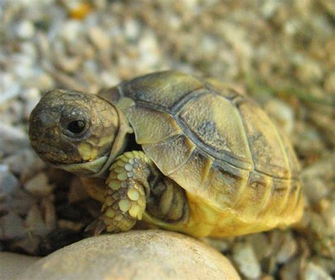 le pour tortue hermann tortue sonne avec impasse des pas perdus
