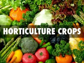 what is horticultural horticulture crops by anhad sandhu
