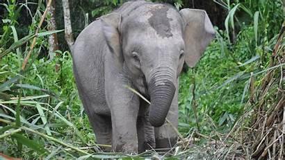 Elephant Child Pretty Wallpapers Animals Walls