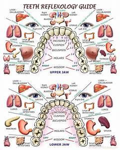 Teeth Reflexology Guide  Print  8x10 In 2020