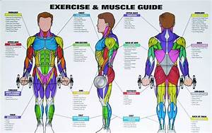 Best Exercises For Each Body Part That You Should Be Doing
