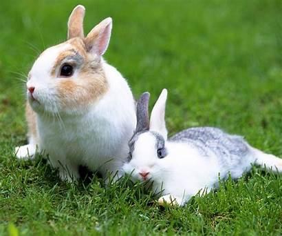 Rabbit Desktop Wallpapers Background Bunny Wallpapersafari