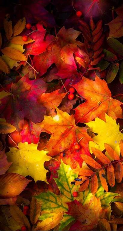 Autumn Leaves Fall Wallpapers Iphone Backgrounds Phone