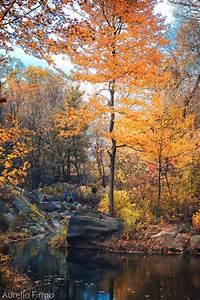fall on Tumblr