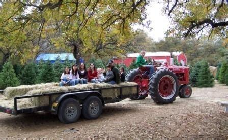christmas tree farms san antonio haynie s green acres tree farm crowley tx kid frien trekaroo