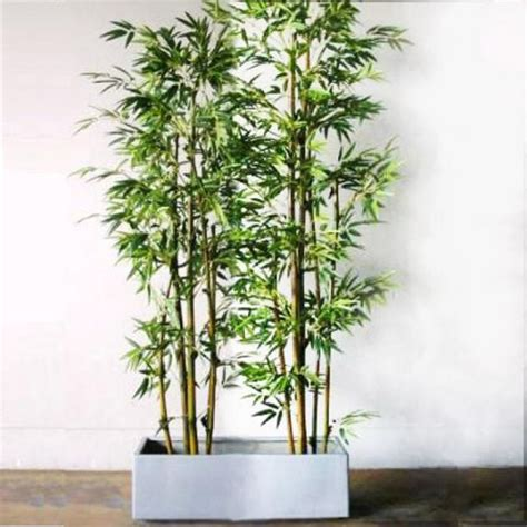 bamboo in a pot growing bamboo as a landscape plant landscape plant