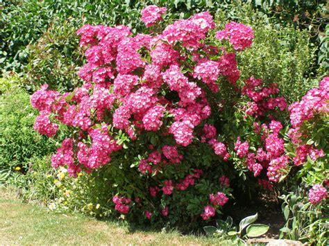 Plants With A Very Long Flowering Season  Grows On You