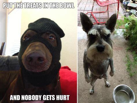 Gangster Animals