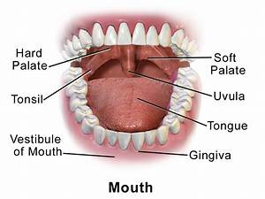 Oral Cavity Examination