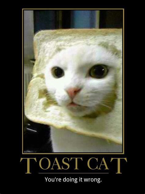 Toast Meme - cat toast meme 28 images funny cat toast bread face on imgfave cat birthday wishes kappit