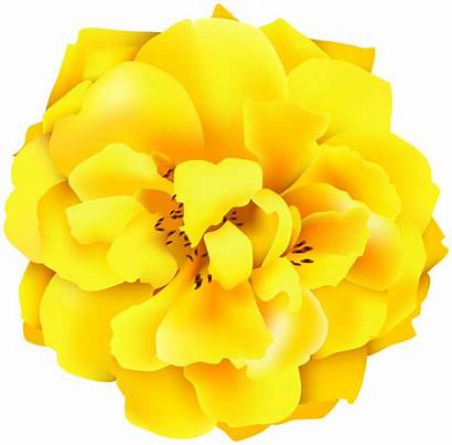 Yellow Rose Clipart Roses Abstract Yopriceville Transparent