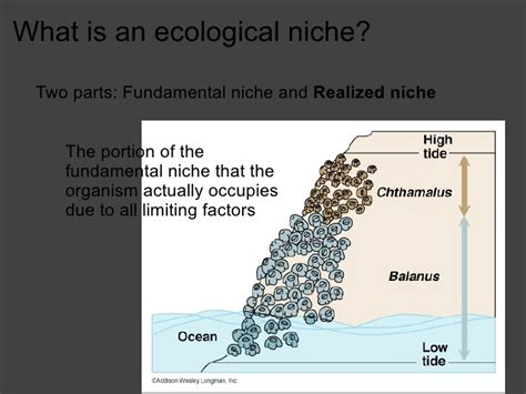 A Brief Introduction To Niche Modelling