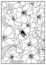 Coloring Flower Printable Pattern sketch template