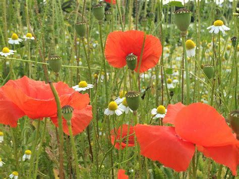 bloemen in assen bloemetjes in de tuin duurzaamheidscentrum assen