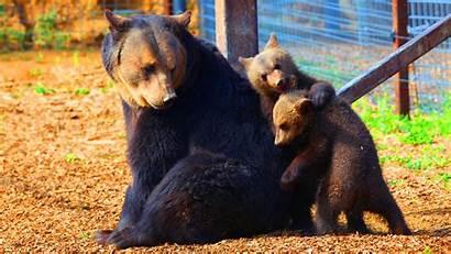 Cubs Bear Peta Ursula Mother Animales Think