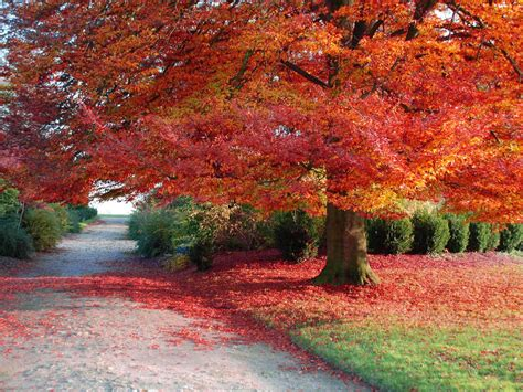 Autumn Wallpapers Free by 40 Autumn Background Wallpaper For Desktop