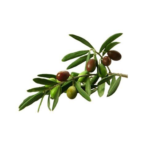 la cuisine citation sticker rameau d 39 olivier adhésif décoratif sticker