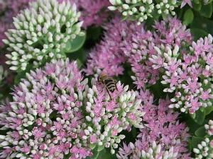Welche Blumen Für Bienen : was bl ht im september ~ Eleganceandgraceweddings.com Haus und Dekorationen
