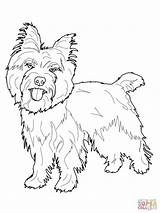 Spaniel Cocker Coloring Pages Printable Getcolorings sketch template