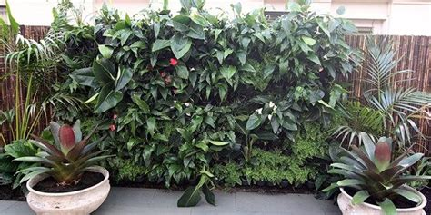 build  vertical garden terrasse  jardin