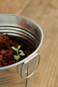 A Beginner U0026 39 S Guide To Growing Lavender Seeds
