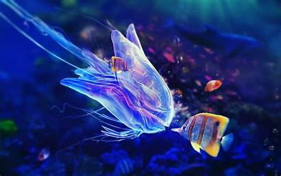 Fish Colorful Underwater Sea Jellyfish Animals Backgrounds